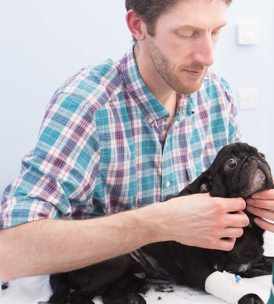 Vet with pug